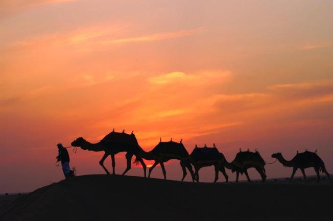 camelsunsetn