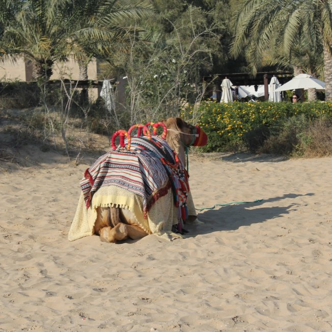 bab al shams 147