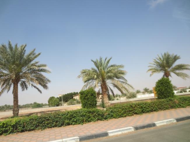 Al Ain Zoo 004