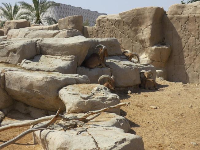 Al Ain Zoo 031