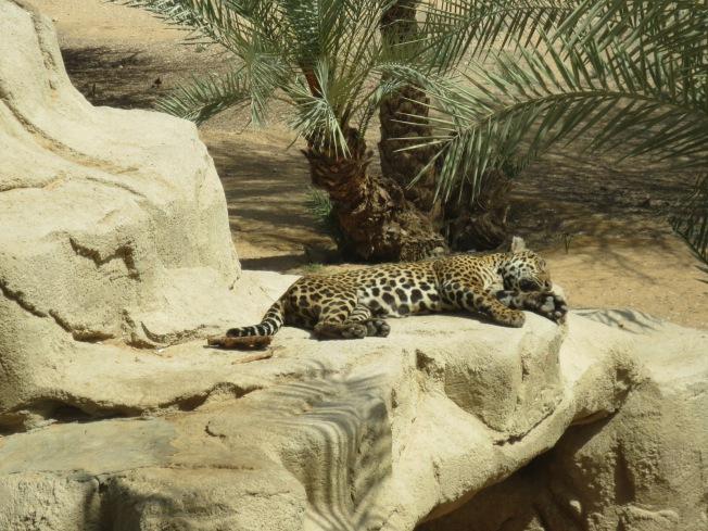 Al Ain Zoo 075