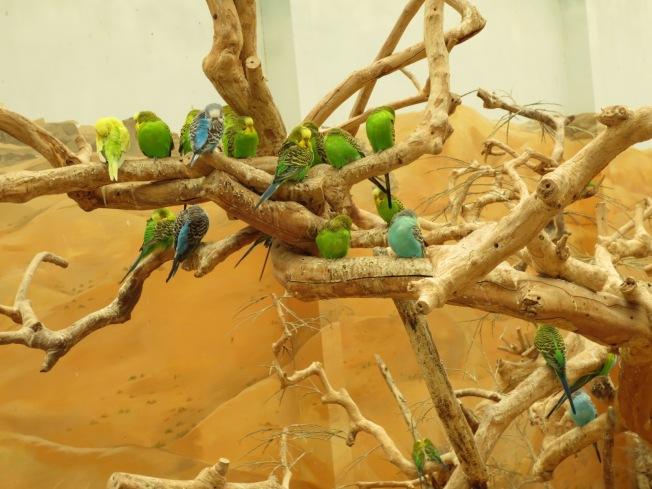 Al Ain Zoo 112