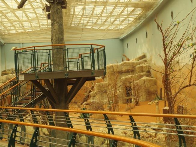 Al Ain Zoo 113