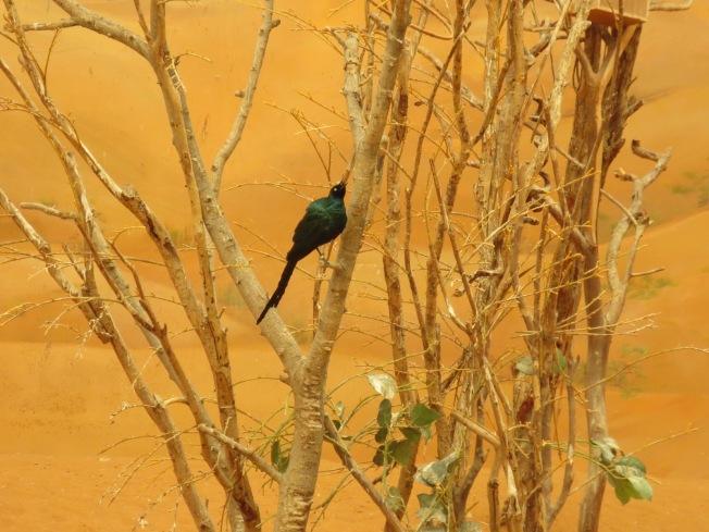 Al Ain Zoo 119